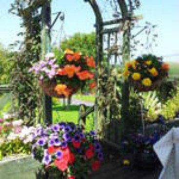 Mount Edward Lodge Garden