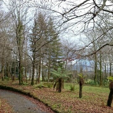 Lissadell Forest Trail