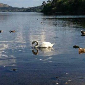 Lough Gill Tours Video